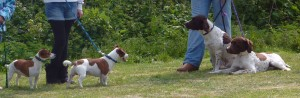 Dog section at Gwinear Show