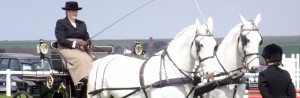 Horse and trap from the Gwinear Agricultural Show