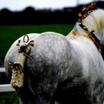 Gwinear 2015 Heavy horse