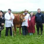 Gwinear 2015 cattle section winner