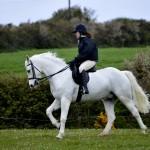 Gwinear 2015 grey pony warming up