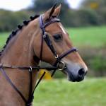 Gwinear 2015 head of pony