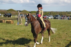 Horse Champion of Show